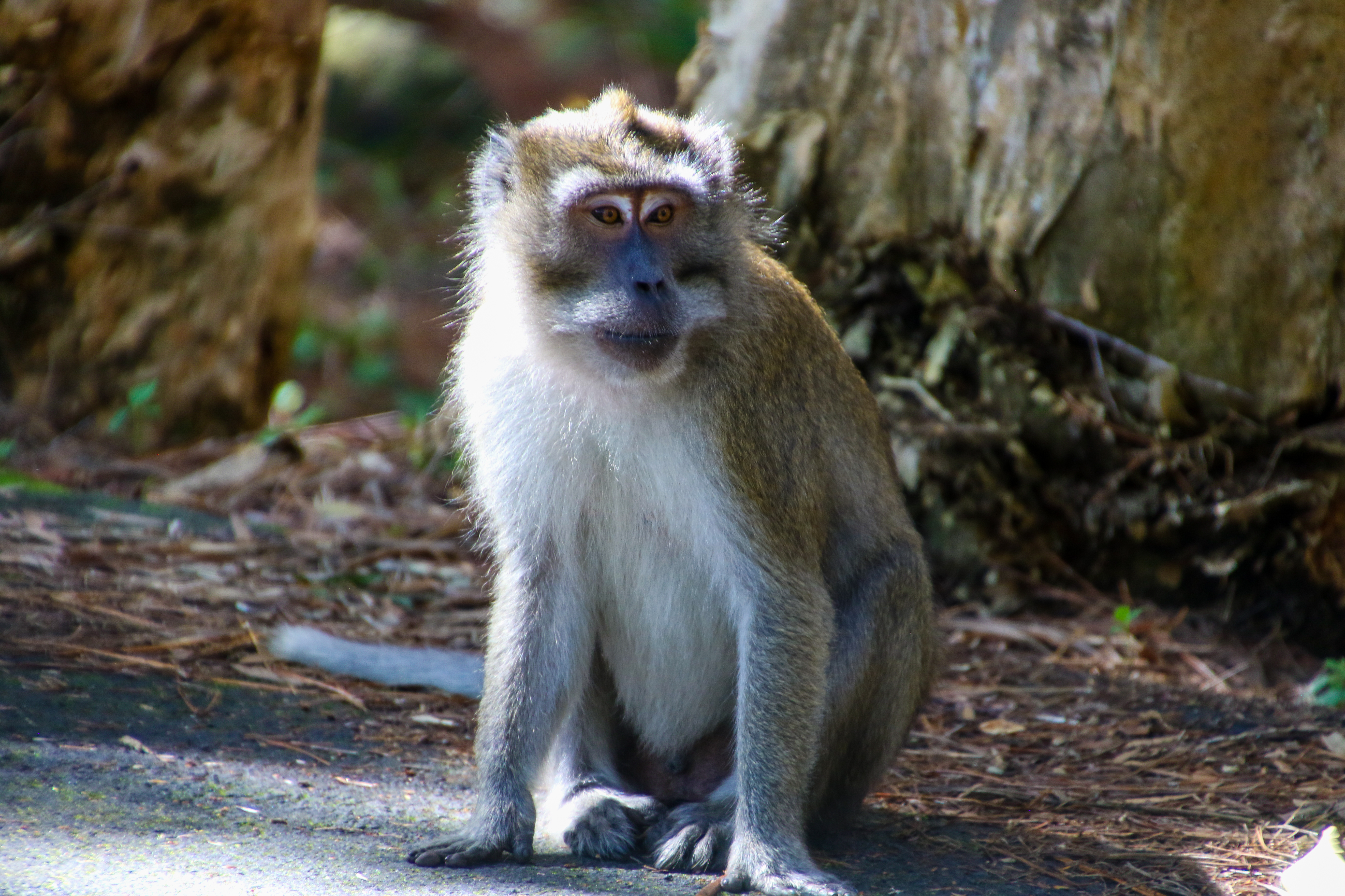 Brown and White Monkey