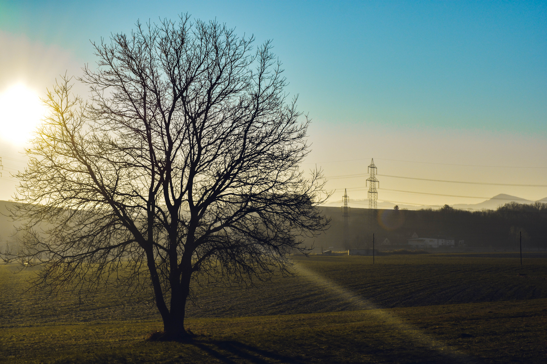 Free stock photo of nature, sunshine, spring, tree