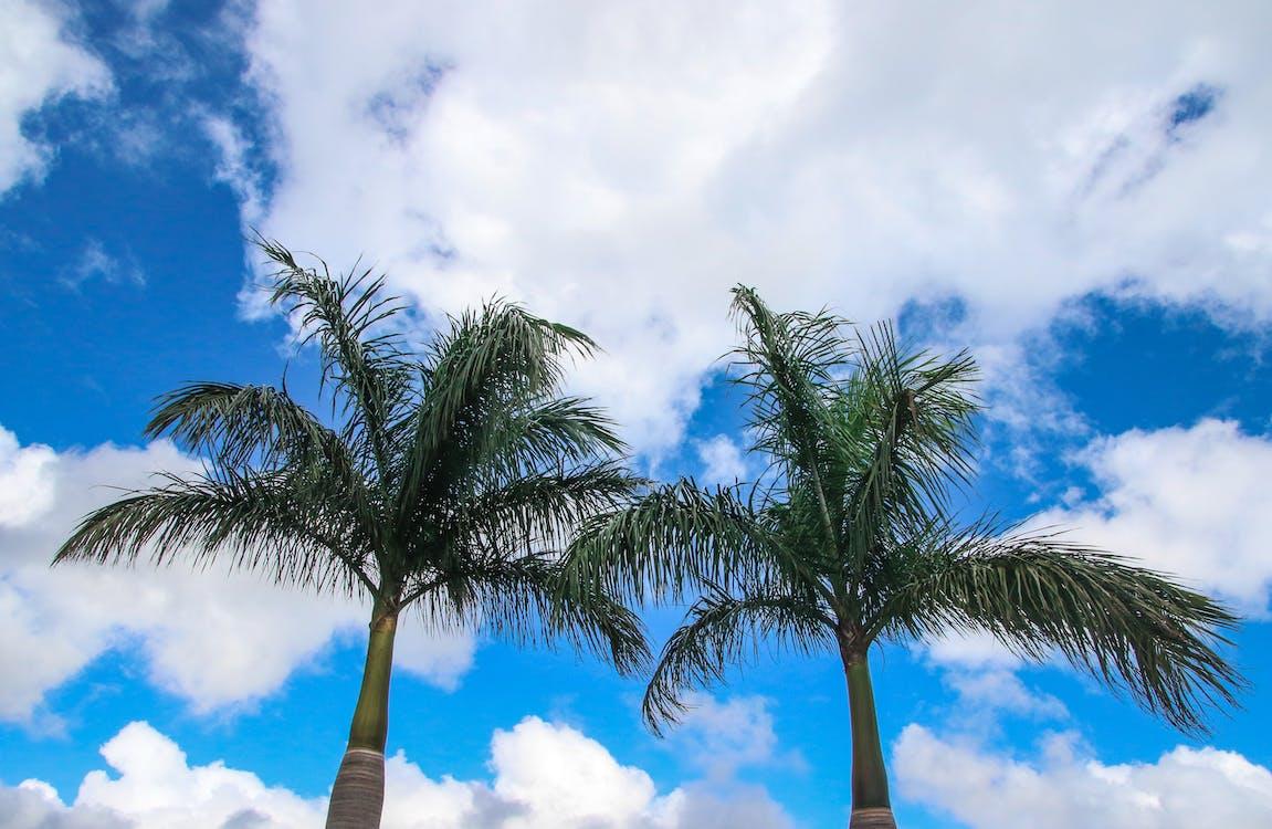cel, cocoters, foto amb angle baix