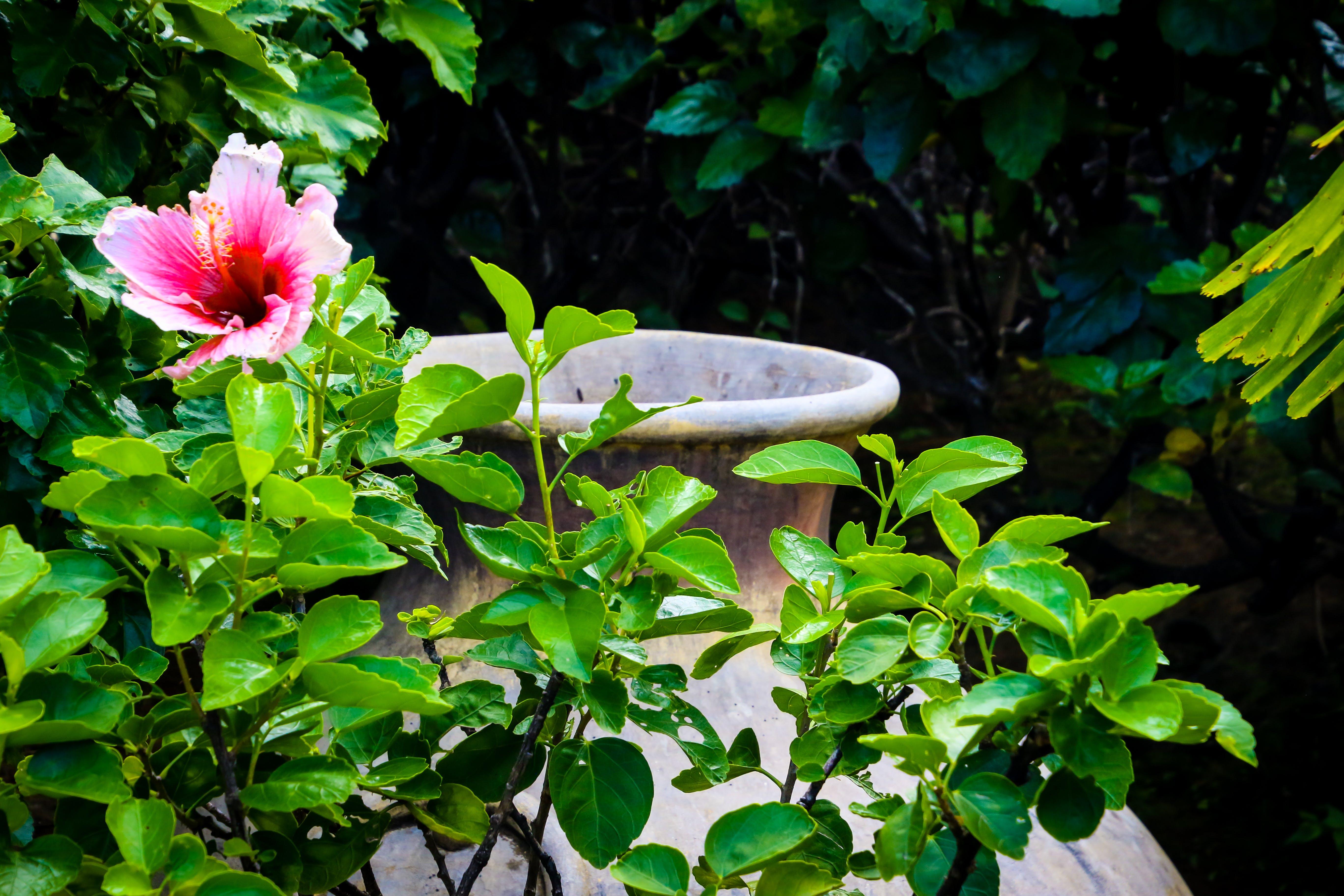 Free stock photo of nature, flowers, garden, pot