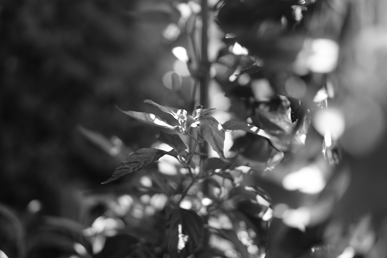 Free stock photo of #Tree, black and white, ecology, focus