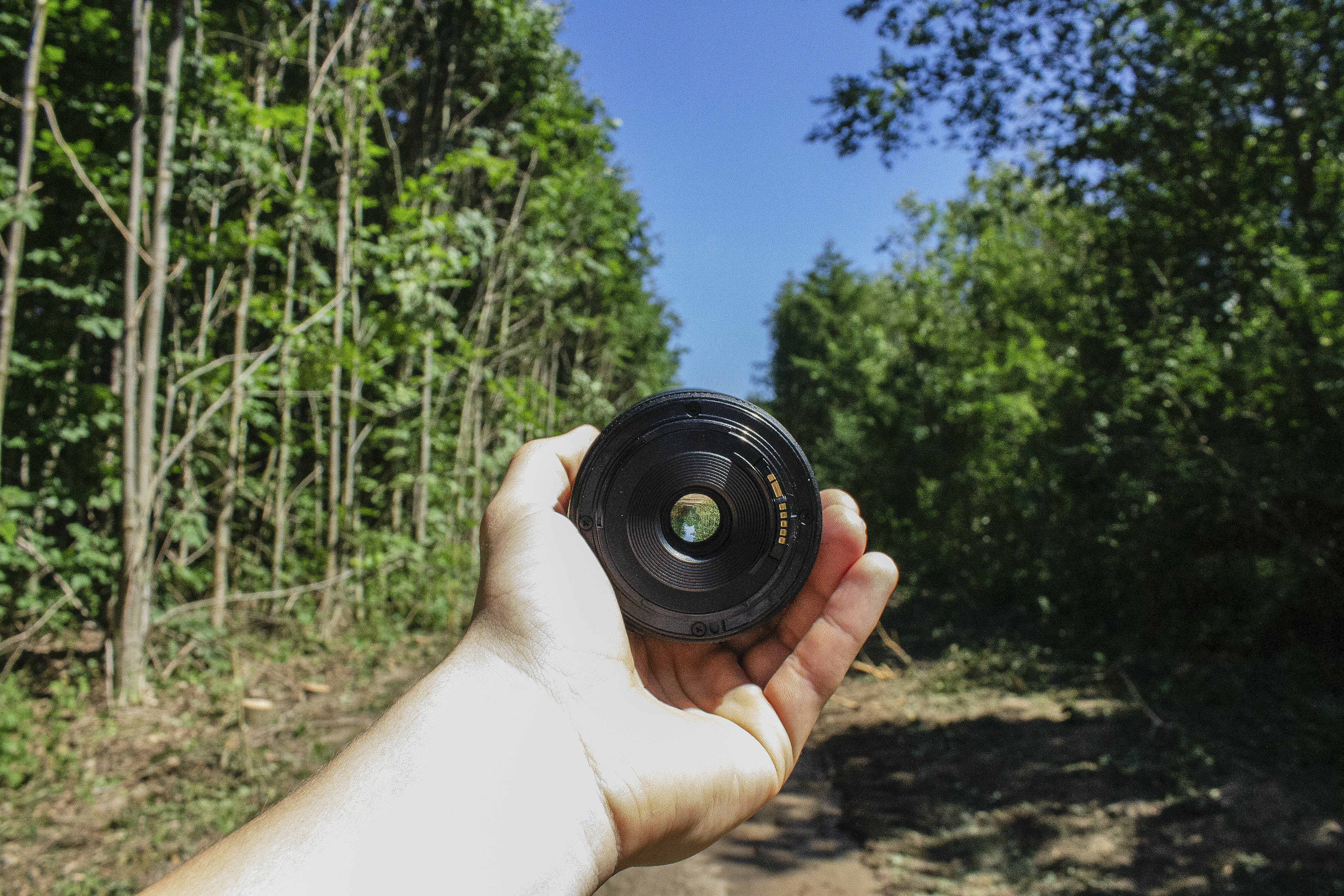 Person Holding Camera Lens in Woods
