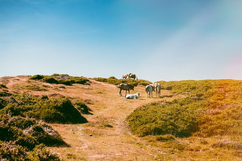 Foto d'estoc gratuïta de animals, bestiar, llum del dia, turó