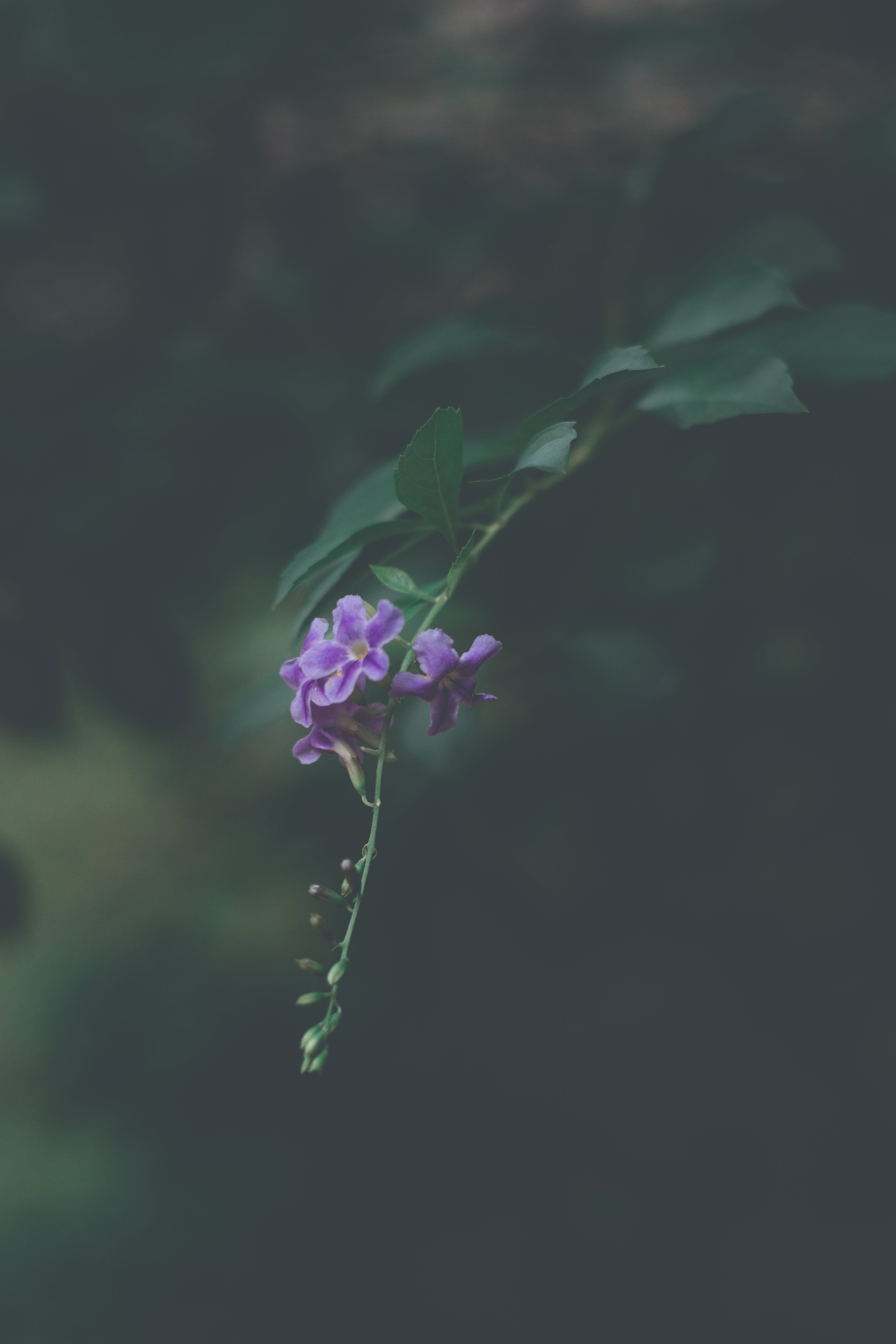 Shallow Focus Photo of Green Plant With Purple Flowers