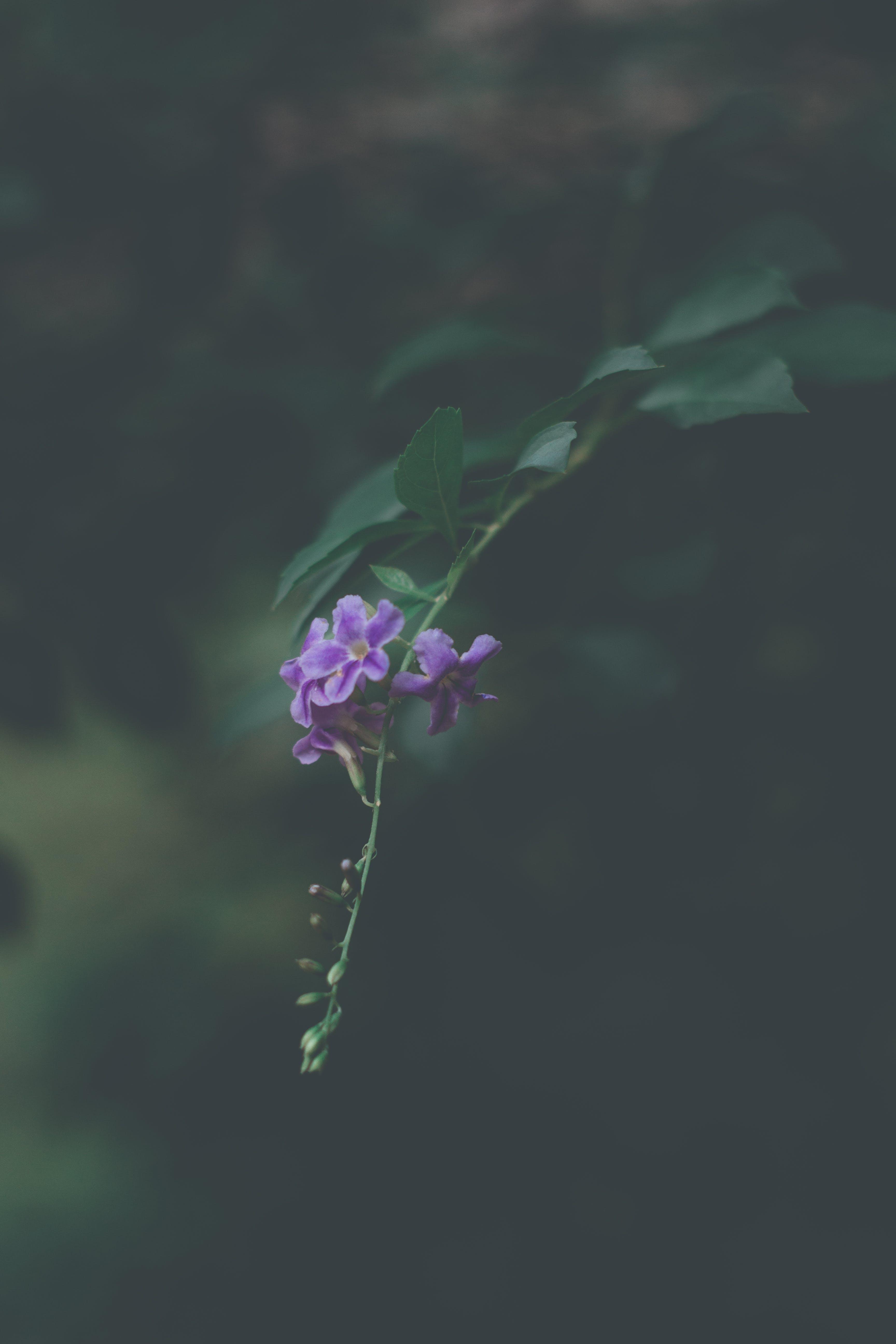 Kostenloses Stock Foto zu natur, blütenblätter, blatt, blume
