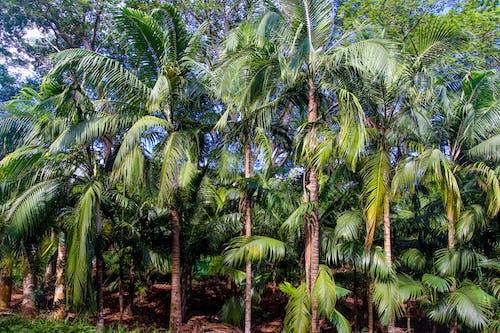 ağaçlar, avuç içi, Bahçe, doğa içeren Ücretsiz stok fotoğraf