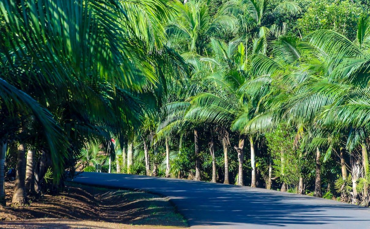 arbori, cocotieri, copaci