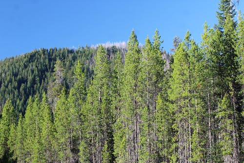 camplife, オレゴン, キャンピング, 森の中の無料の写真素材