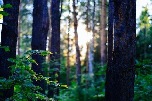 Photos gratuites de aboiement, arbre, automne, bois