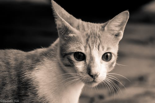 Free stock photo of animal, animal photography, animal portrait, cat