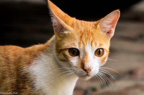動物攝影, 動物肖像, 可愛, 可愛的動物 的 免費圖庫相片