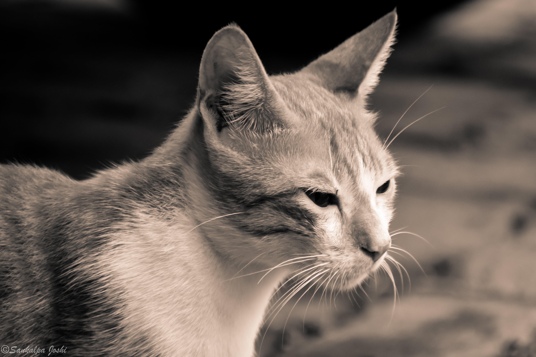 anger, animal, animal photography