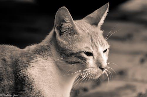 Imagine de stoc gratuită din adorabil, animal, animale adorabile, față de pisică