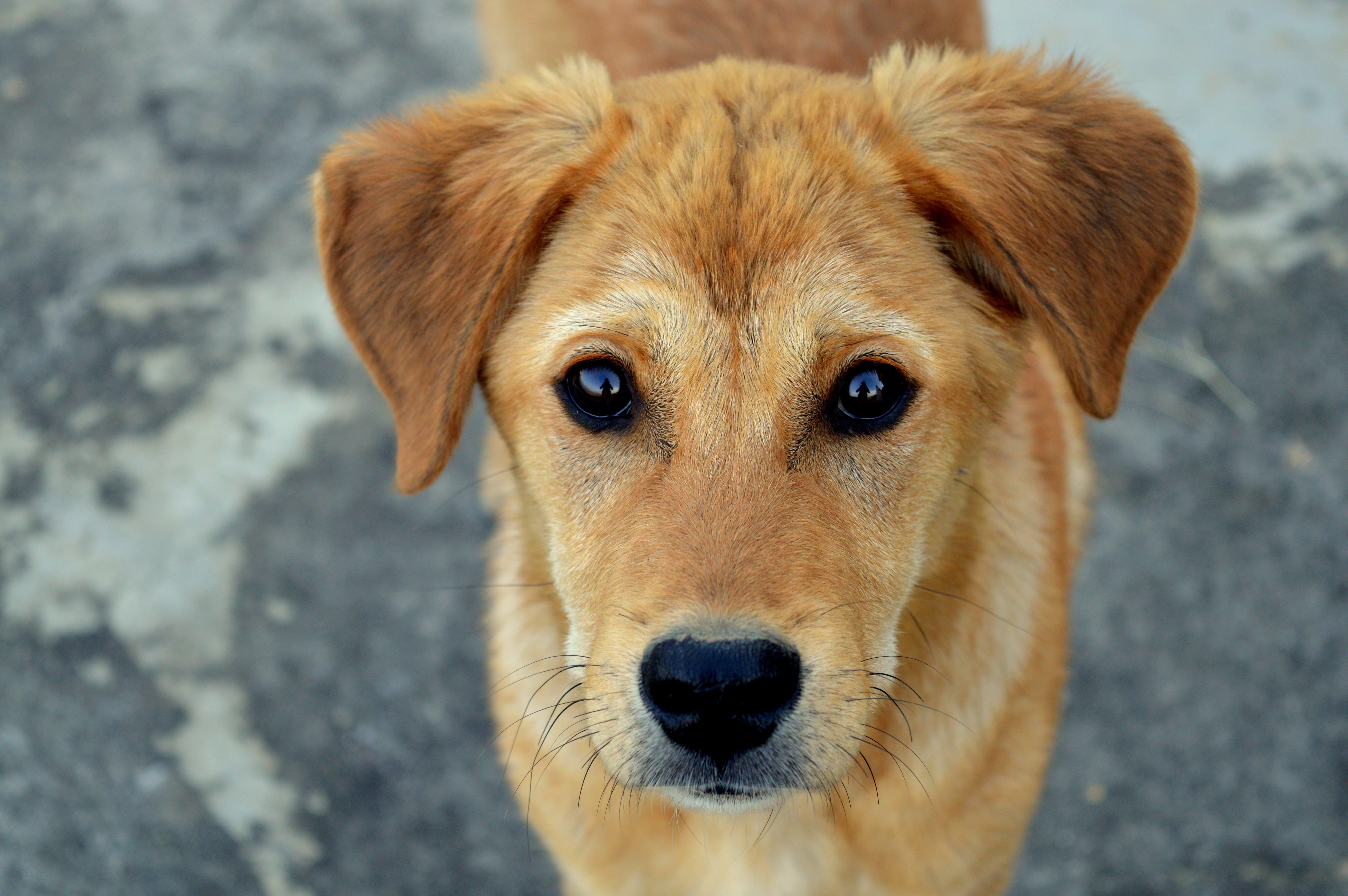Foto stok gratis anak anjing, anjing, berkembang biak, binatang