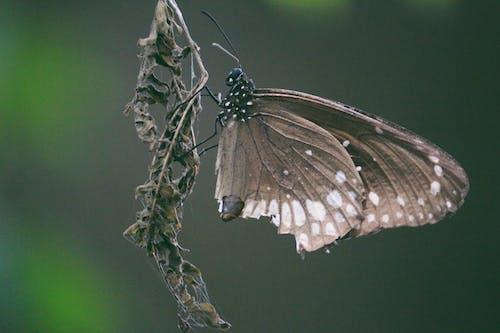 Gratis arkivbilde med sommerfugl
