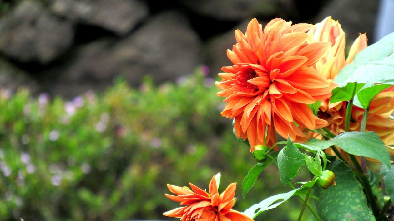 flores bonitas, flores lindas