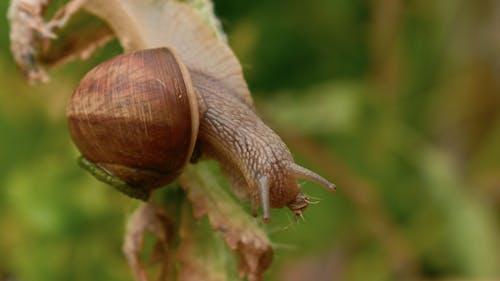 Free stock photo of close, close-up, macro, snail