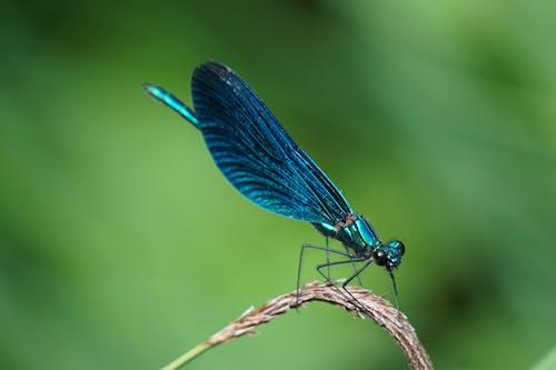 Kostenloses Stock Foto zu draußen, fliege, flügel, insekt