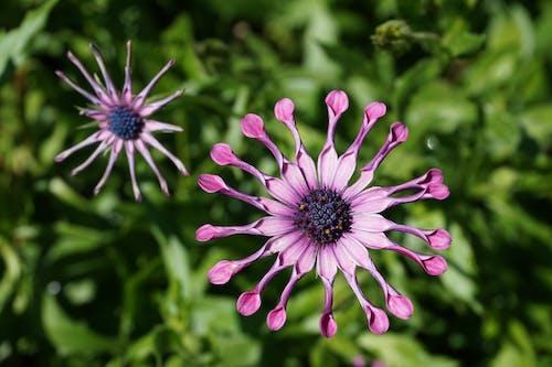 çiçek, Çiçek açmak, doğa, hayat içeren Ücretsiz stok fotoğraf