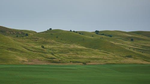 Free stock photo of green, transilvania, windows, xp
