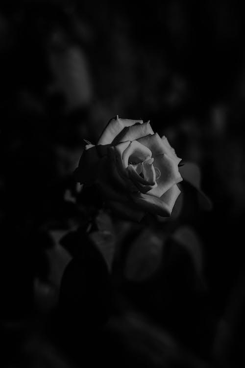 Darmowe zdjęcie z galerii z cień, cienie, czarno-biały, fotografia przyrodnicza