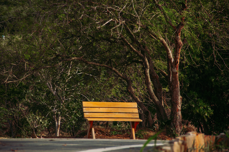 Kostenloses Stock Foto zu #baum, grün, strandstuhl, wald