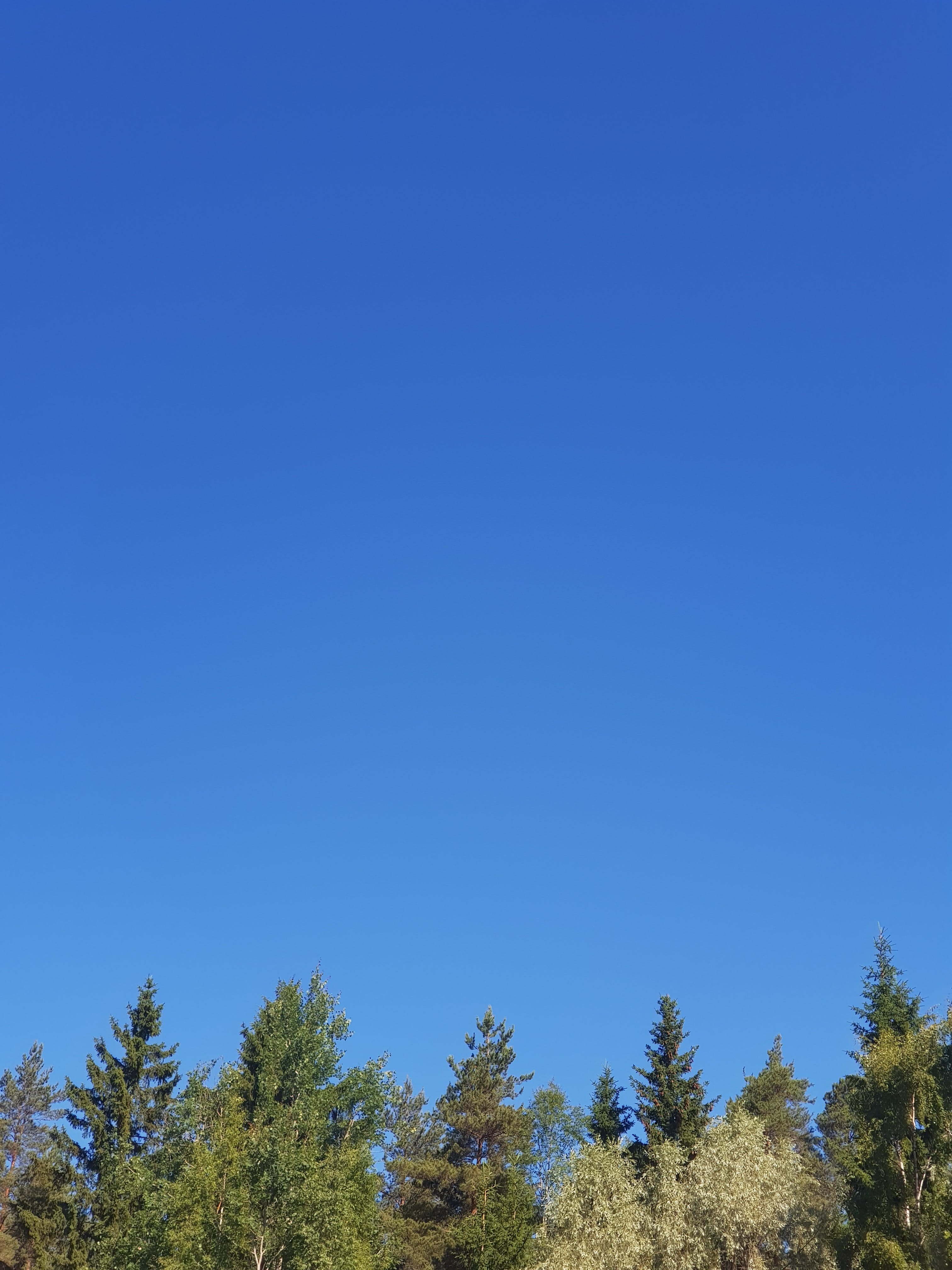 Free stock photo of blue sky, tree