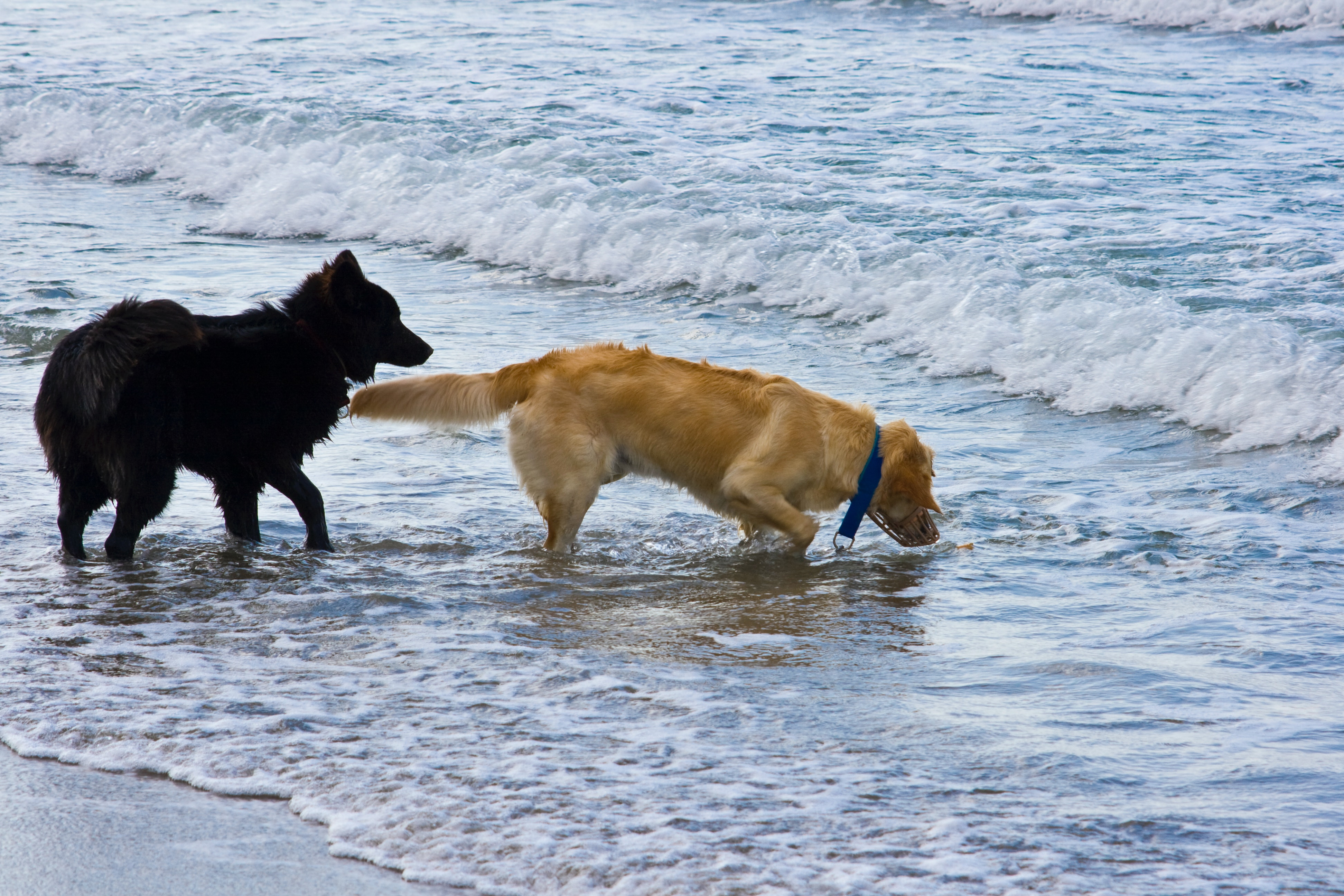 Free stock photo of dogs, friends, sea