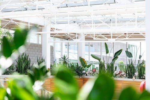 Kostenloses Stock Foto zu botanische gärten, flora, garten, gewächshaus