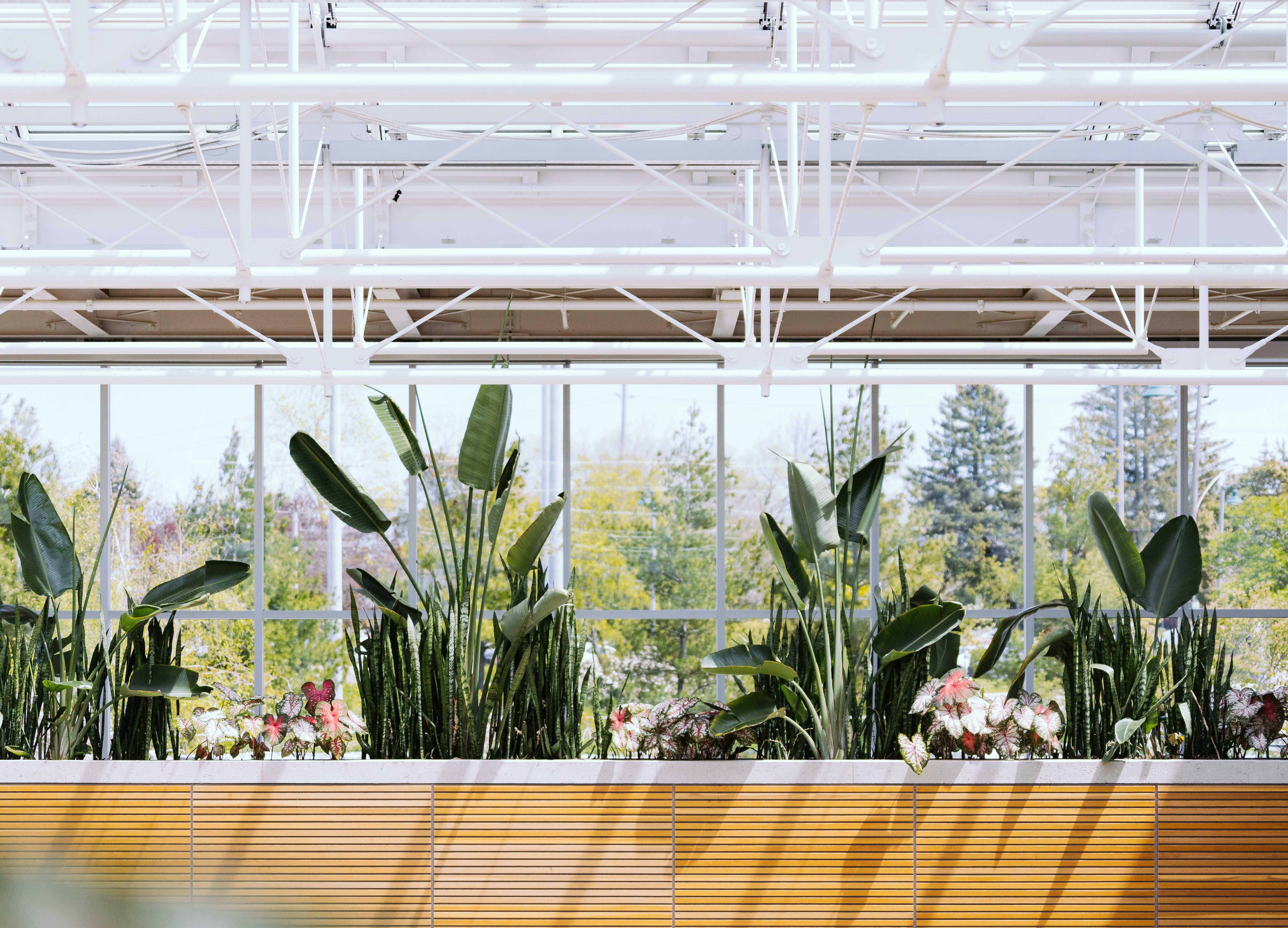 of botanical gardens, greenhouse