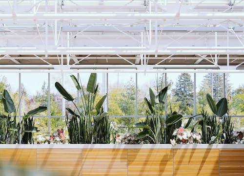 Foto d'estoc gratuïta de hivernacle, jardins botànics