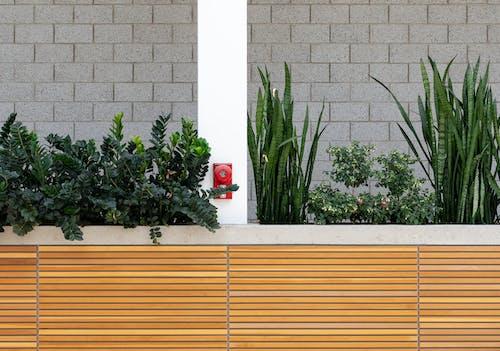 คลังภาพถ่ายฟรี ของ การเจริญเติบโต, พืช, พืชงูเขียว, สี