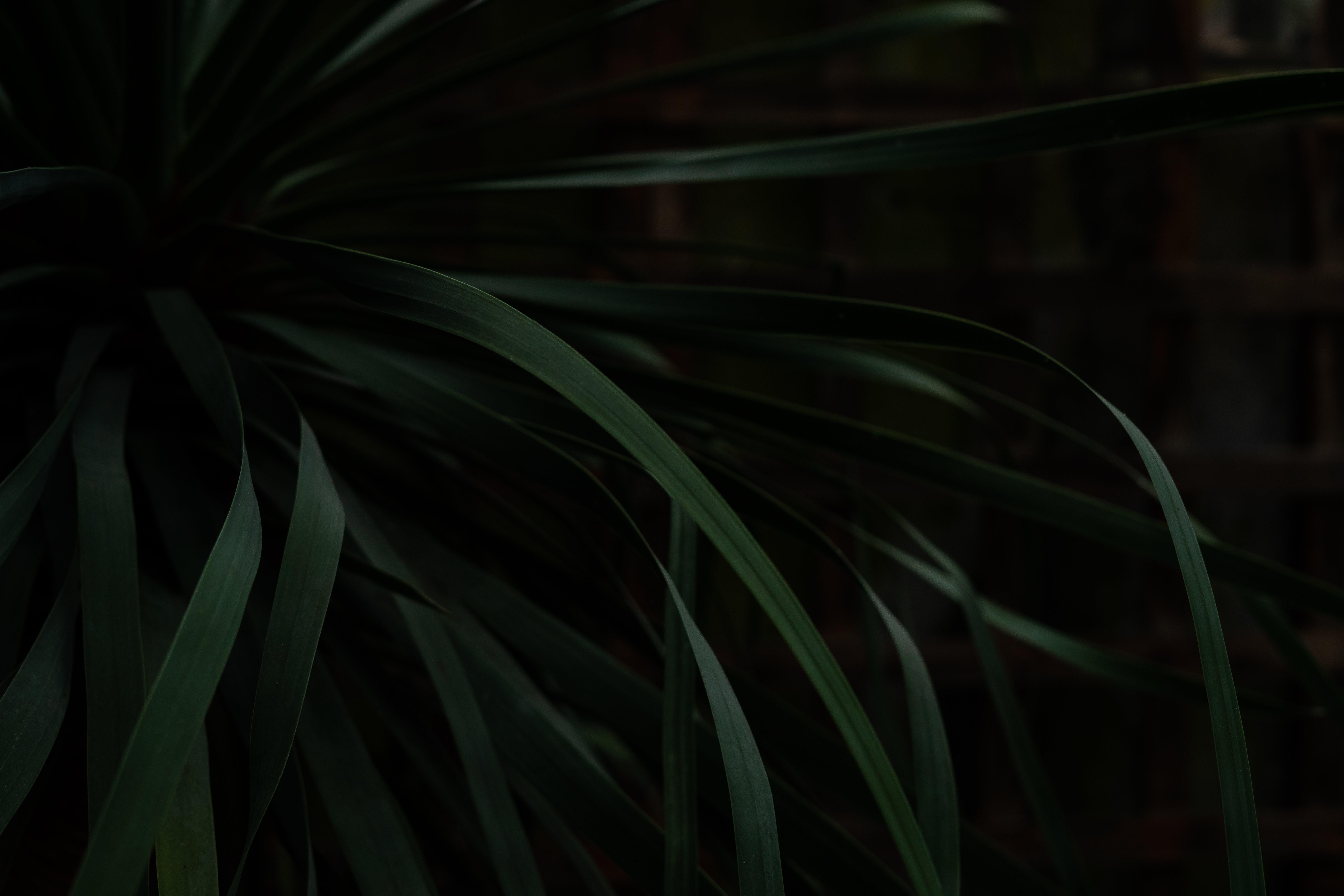 botânico, close, ecológico
