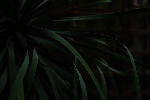 Foto profissional grátis de botânico, close, ecológico, estrutura