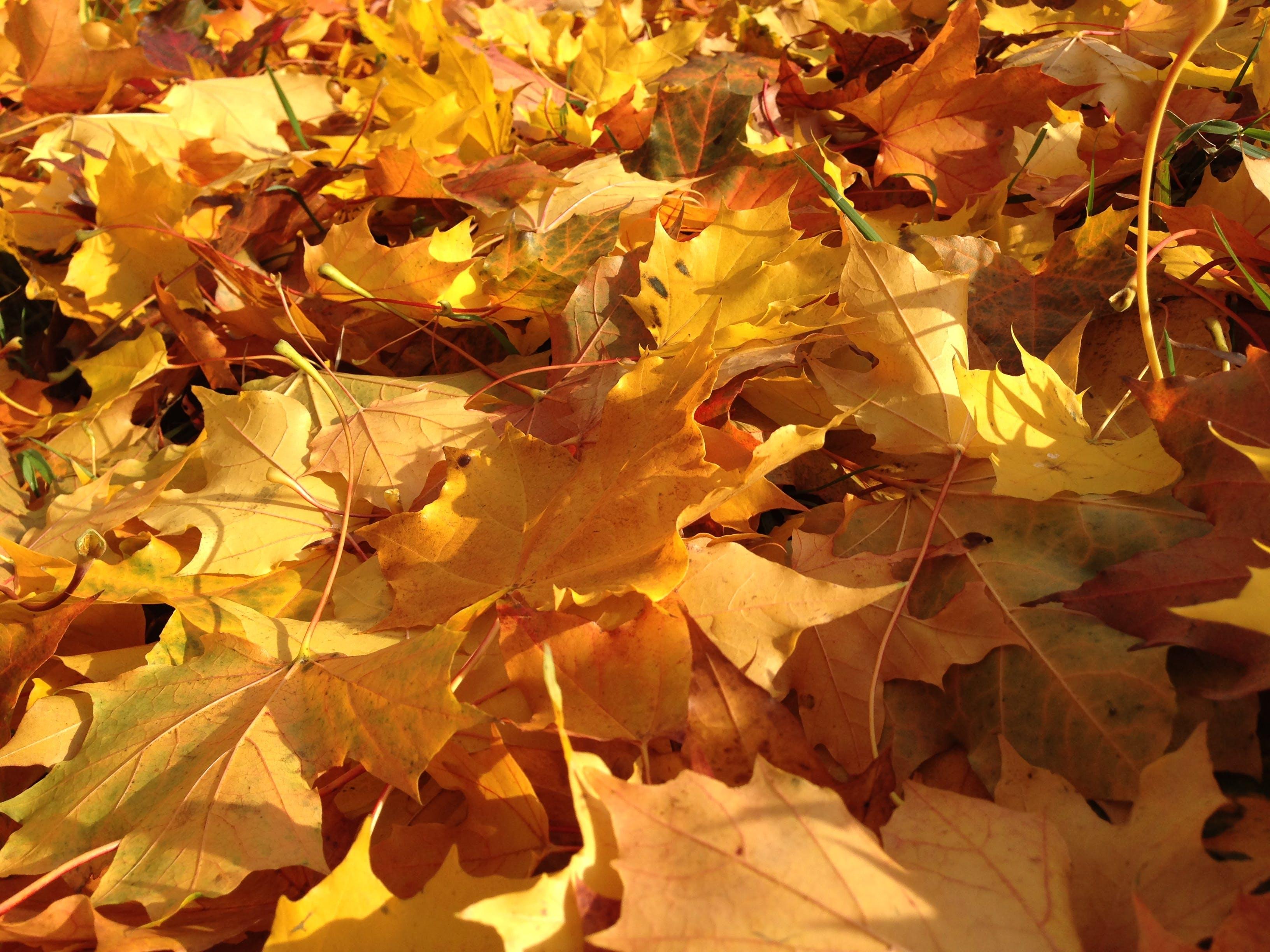 Free stock photo of autumn