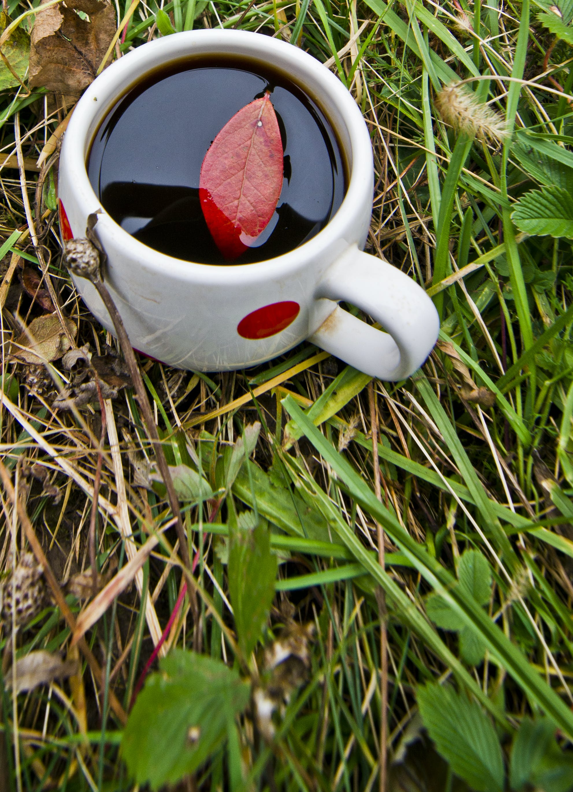Free stock photo of black coffee, coffee, cup of coffee, garden