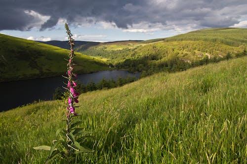 Free stock photo of country, holiday, ireland, landscape