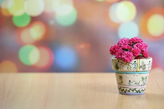1000 interesting flower pot photos pexels free stock photos shallow focus photography of pink flowers mightylinksfo