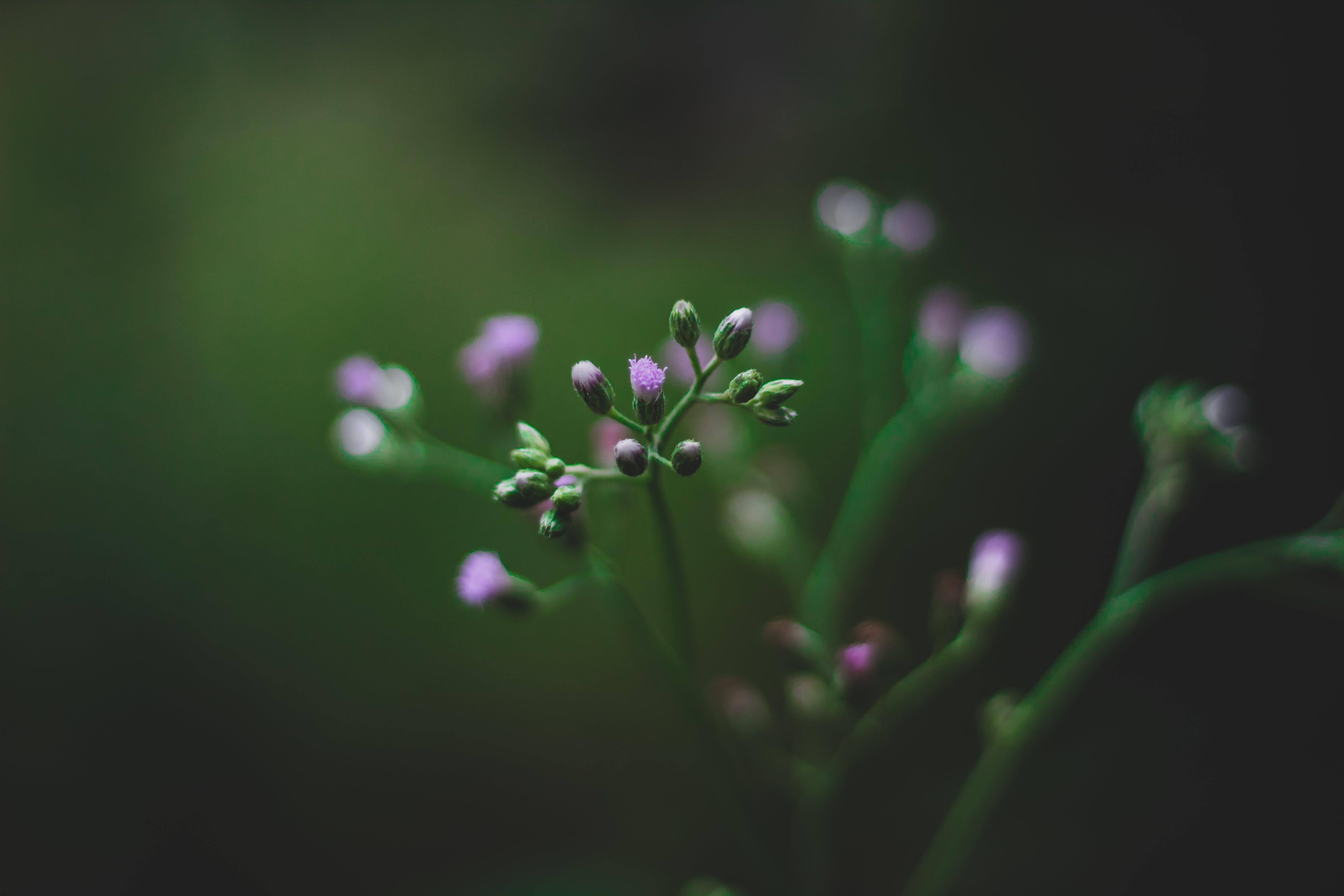Gratis lagerfoto af blomst, close-up, delikat, farve