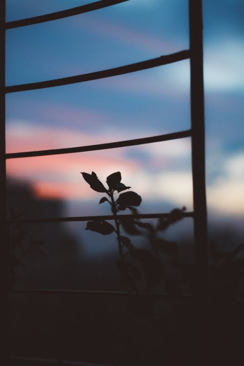 Silhouette Photo of Plant