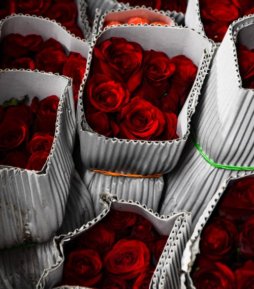 #花#バラ#ニコンの無料の写真素材