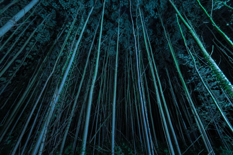 Fotobanka sbezplatnými fotkami na tému nízkouhlá fotografia, nočný čas, stromy, tma