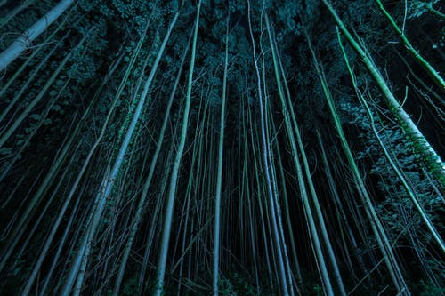 High-rise Trees during Night