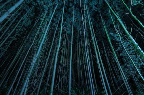 나무, 로앵글 촬영, 밤 시간, 어두운의 무료 스톡 사진