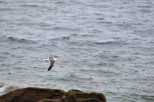 คลังภาพถ่ายฟรี ของ eau, faune, mer, oiseau