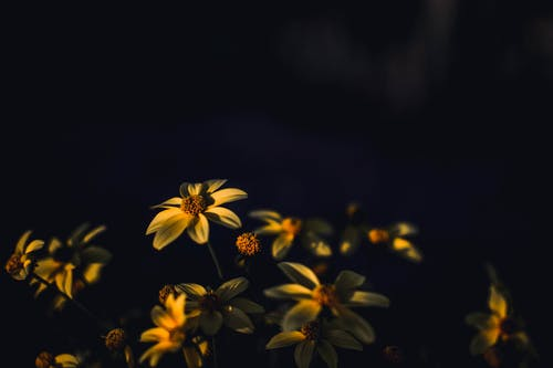 Selective Focus Photography of Yellow Daisy Flowers