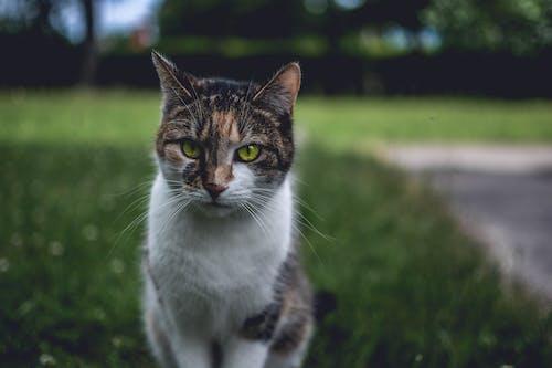 Imagine de stoc gratuită din adorabil, animal, animal de casă, căutare