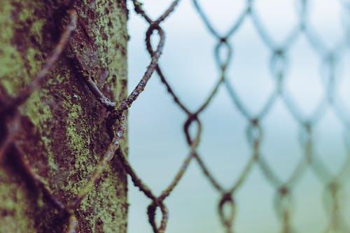 Základová fotografie zdarma na téma mřížka, oxidace, školní známka, sníh