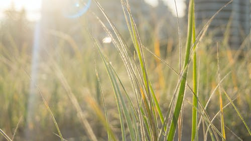 太陽光線, 成長, 日光, 昼間の無料の写真素材