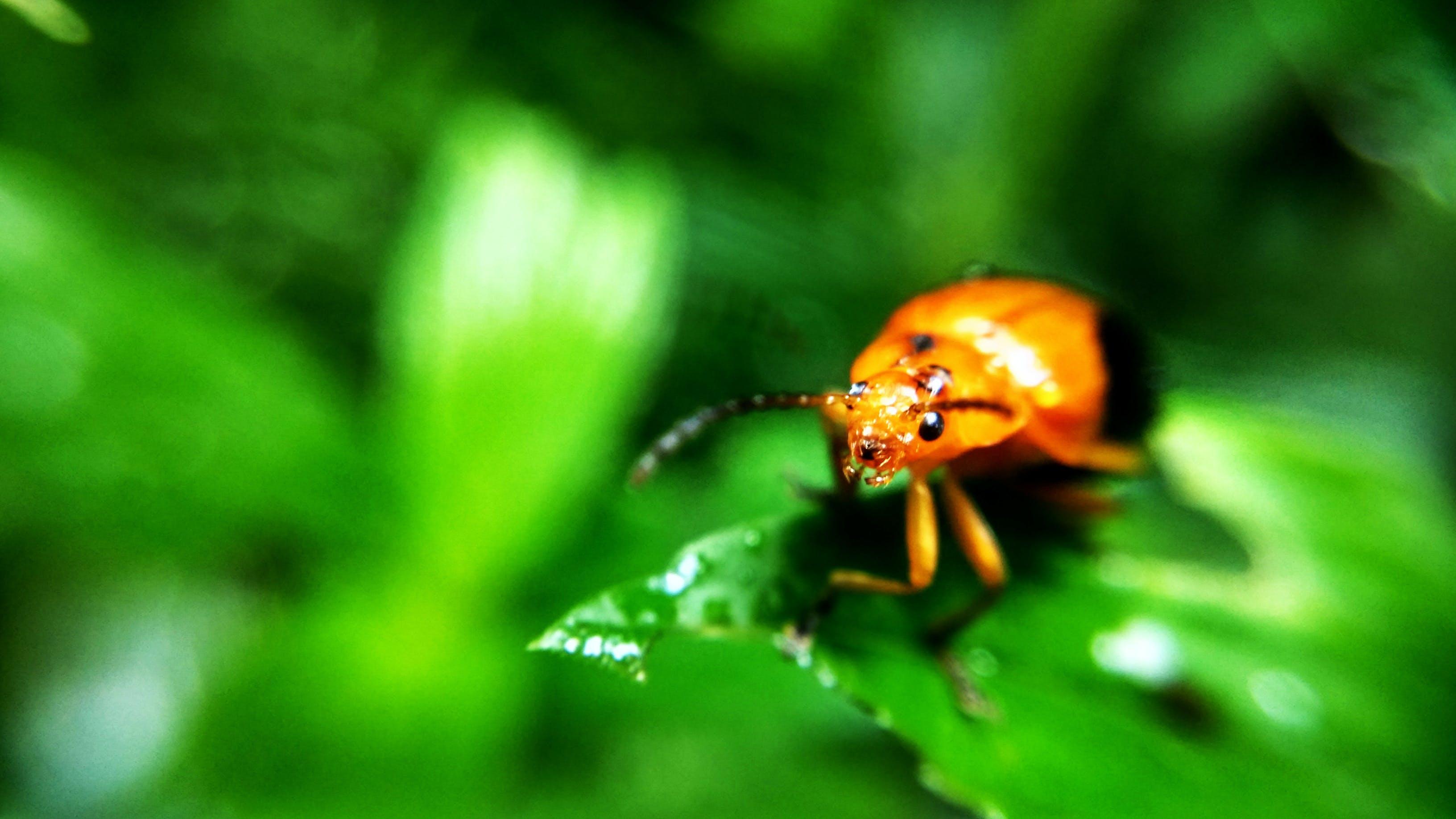 Free stock photo of bee, macro, macro photography, Pine Tree Macro